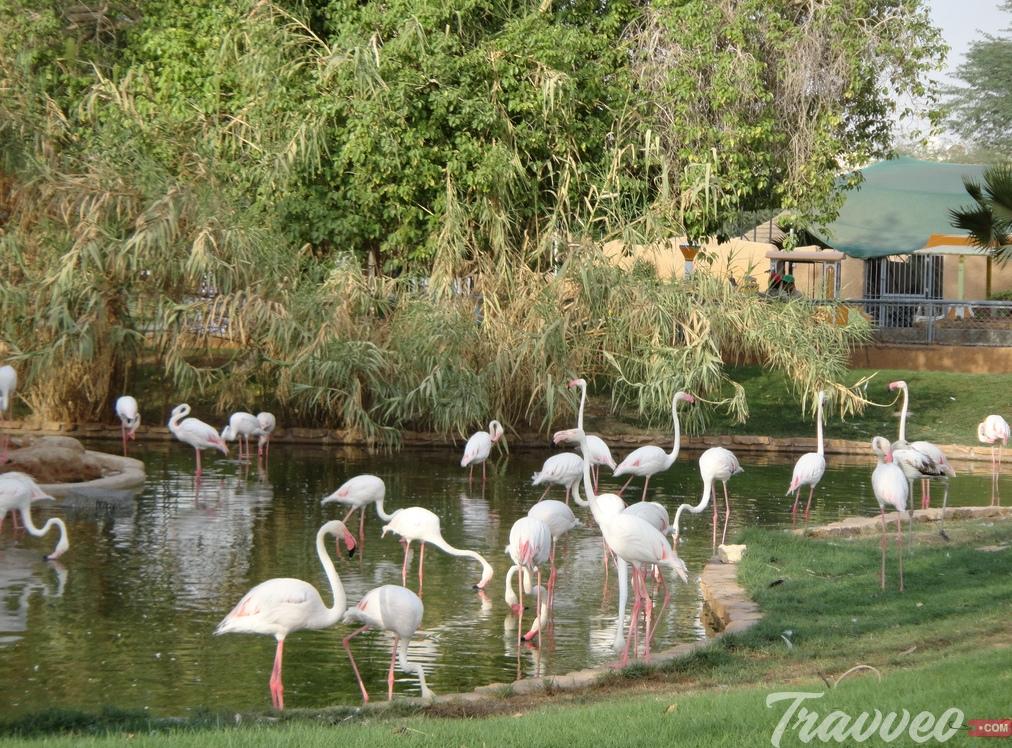 حديقة الحيوانات بالرياض