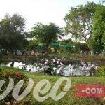 حديقة حيوان الرياض - ترافيو كوم