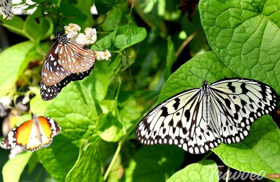 حديقة الحيوان الوطنية كولومبو