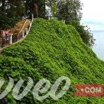 الحديقة النباتية في باتومي