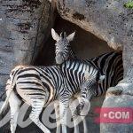 حديقة حيوانات هاجينبك