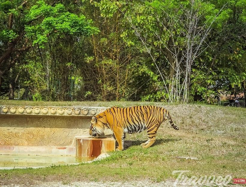 حديقة حيوان ميامي