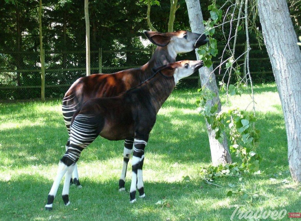 حديقة حيوانات لشبونة