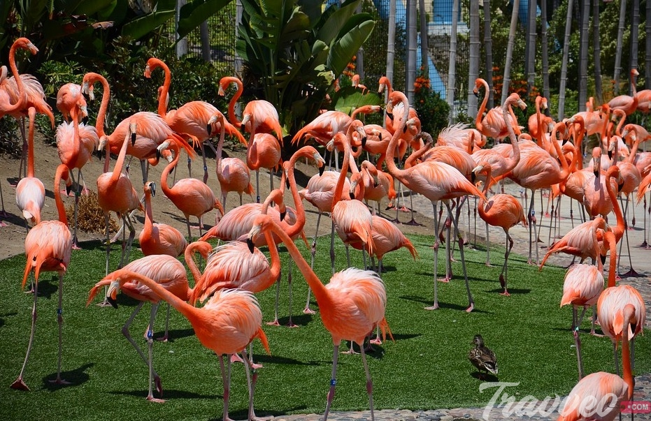 حديقة حيوان سان دييغو