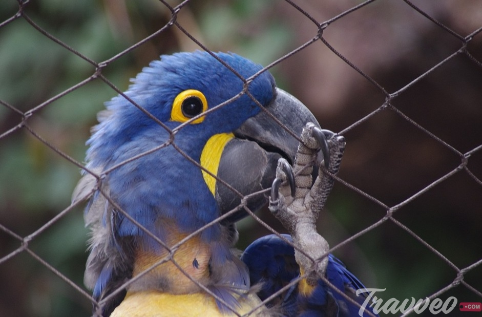 حديقة حيوان فيلاديفيا