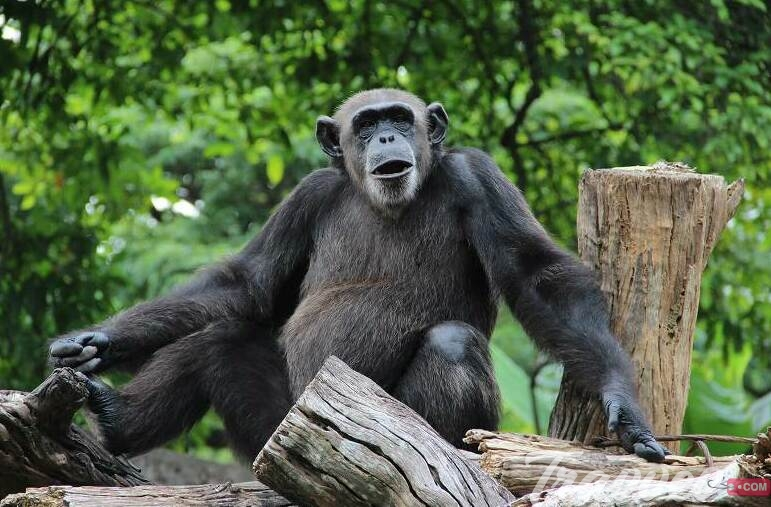 حديقة حيوانات بلاكبول