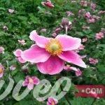حديقة الزهور بادن بادن