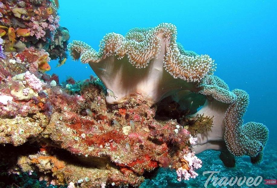 عروض سياحية جزر المالديف