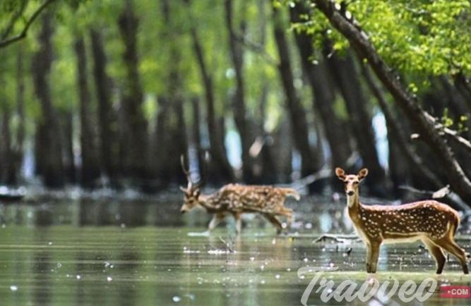 دليلك السياحي فى بنجلاديش