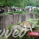 حديقة حيوان لينكولن
