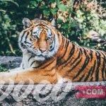 حديقة حيوانات كولونيا
