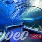 اكواريوم الحياة البحرية بملبورن