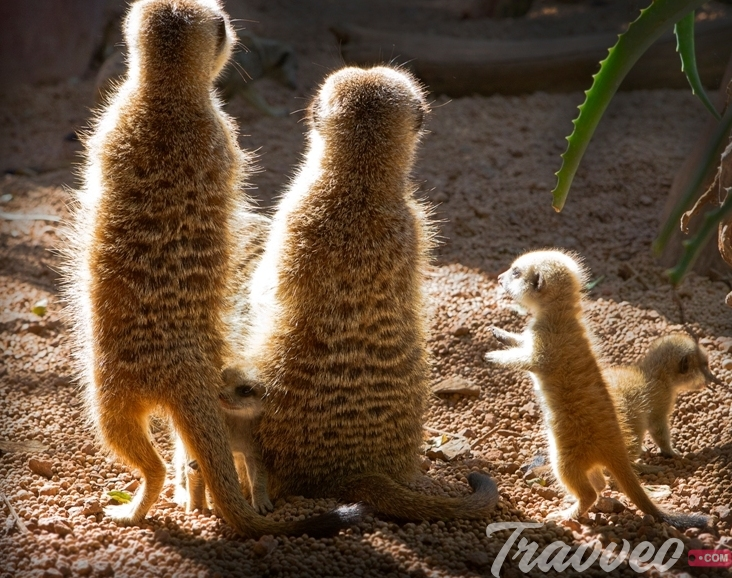 حديقة حيوان بيرث