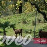Tirana Zoo
