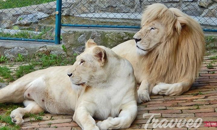 حديقة حيوان بلغراد