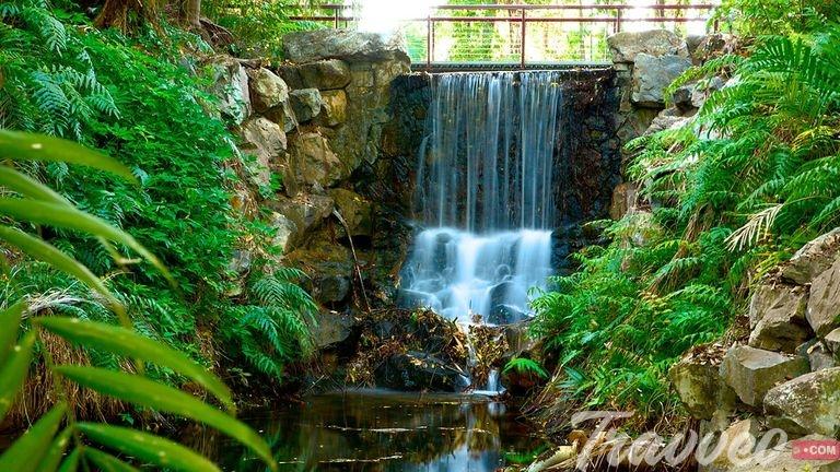 حديقة داروين النباتية