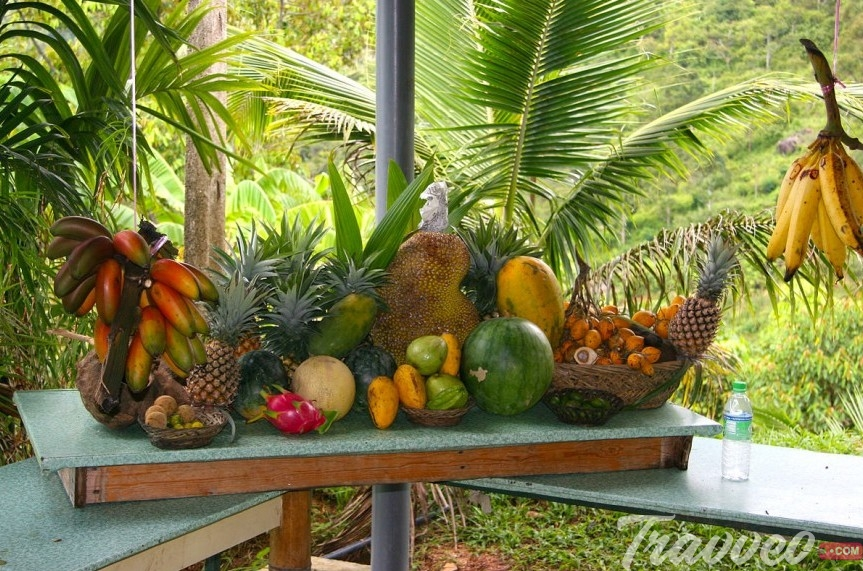 حديقة الفواكه