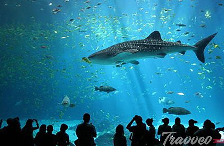 عالم تحت الماء لنكاوي