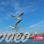 تأشيرة السفر الي تركيا