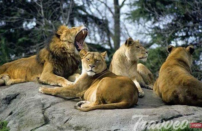 حديقة حيوان وودلاند بارك