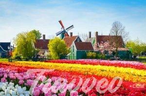 جولة سياحية مميزة الي شانس زانسي هولندا