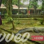 حديقة حيوان باندونق