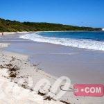 شاطي نصف القمالسياحة في جزيرة نيكر البريطانيةر