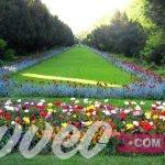 حديقة سيسميجيو