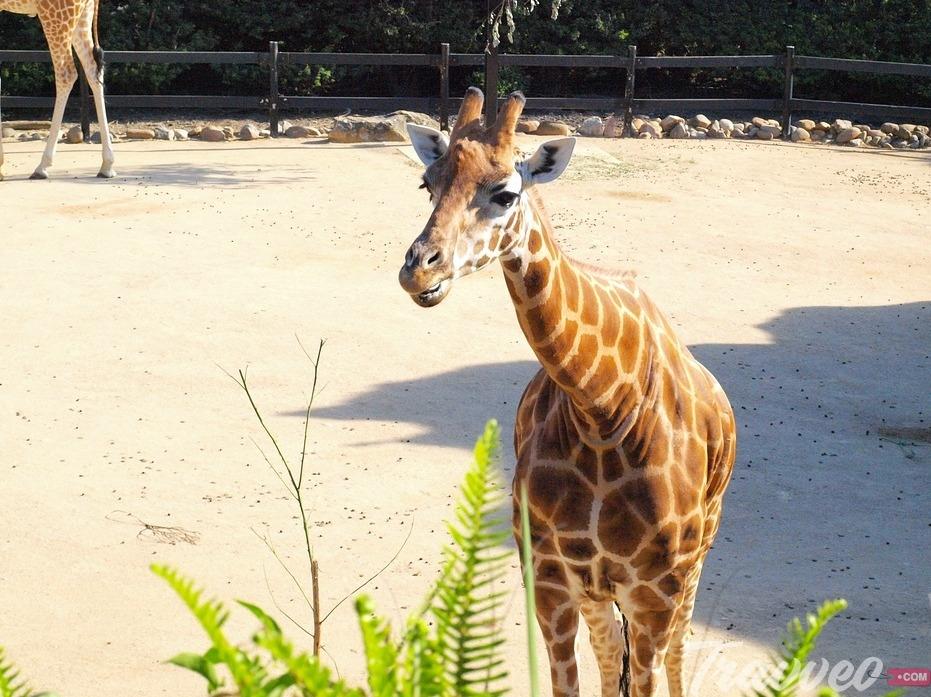 حديقة حيوان تارونجا