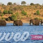 جولة سياحية مميزة في بوتسوانا