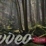 الغابة السوداء